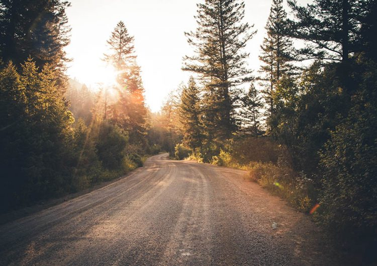 Camino de tierra entre árboles